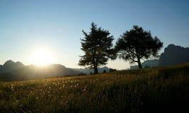 Paesaggio idilliaco meraviglioso dell'alpe con gli alberi e gli alti gras Fotografia Stock Libera da Diritti