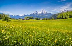 Paesaggio idilliaco nelle alpi con i prati ed i fiori verdi Fotografia Stock