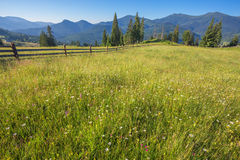 Paesaggio idilliaco nelle alpi con i prati verdi freschi Immagine Stock