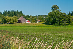 Paesaggio idillico dell'azienda agricola della famiglia Immagine Stock