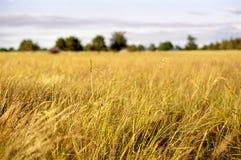 Paesaggio impressionistico del campo del paese Fotografia Stock Libera da Diritti