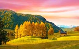 Paesaggio incredibile di autunno con il larice giallo in Alpe di Siusi i Immagini Stock
