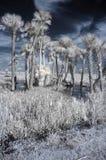 Paesaggio infrarosso dell'area umida fotografia stock libera da diritti
