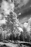 Paesaggio infrarosso della foresta Fotografie Stock