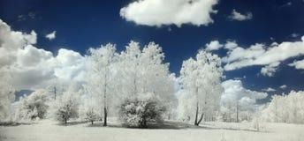 Paesaggio infrarosso un giorno soleggiato Immagine Stock Libera da Diritti