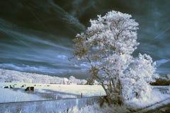 Paesaggio infrarosso unico beautioful sbalorditivo con colore falso Immagini Stock