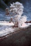 Paesaggio infrarosso unico beautioful sbalorditivo con colore falso Fotografia Stock