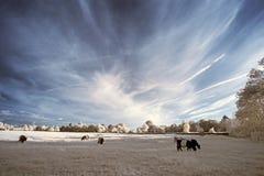 Paesaggio infrarosso unico beautioful sbalorditivo con colore falso Immagine Stock Libera da Diritti