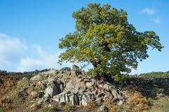 Paesaggio inglese del paese Fotografia Stock