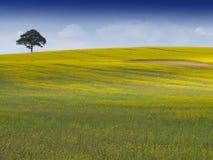 Paesaggio inglese rurale Fotografia Stock