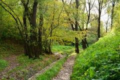 paesaggio iniziale di immagine del hdr di autunno Fotografia Stock