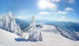 Paesaggio innevato di inverno degli alberi Immagini Stock