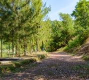 Paesaggio, lago e colline tropicali nel distretto di Kathu su Phuket Fotografia Stock Libera da Diritti