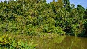 Paesaggio, lago e colline tropicali nel distretto di Kathu su Phuket Fotografia Stock