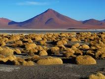 Paesaggio a Laguna Colorada Fotografia Stock Libera da Diritti
