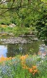 Paesaggio leggiadramente con i lilys dell'acqua Fotografie Stock
