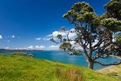 Paesaggio litoraneo del terreno coltivabile con l'albero di Pohutukawa immagine stock