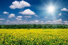 Paesaggio luminoso di estate. giacimento e cielo del girasole Fotografia Stock Libera da Diritti