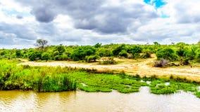 Paesaggio lungo il fiume di Olifants vicino al parco nazionale di Kruger nel Sudafrica Immagini Stock Libere da Diritti