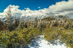 Paesaggio maestoso di inverno ed alte montagne nevose, Carpathians, Romania, Europa Fotografia Stock