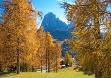 Paesaggio magico di autunno con il larice giallo in un giorno soleggiato Dolom Immagini Stock