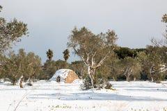 Paesaggio Mediterraneo con di olivo dopo un eccezionale Fotografie Stock Libere da Diritti