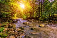 Paesaggio meraviglioso di autunno foglie variopinte che emettono luce al sole, Immagini Stock Libere da Diritti