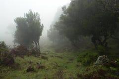 Paesaggio mistico immagine stock