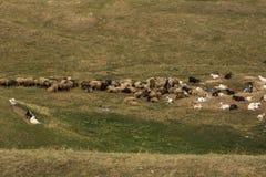 Paesaggio in Moldavia immagine stock