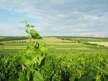 Paesaggio moldavo di estate Fotografia Stock Libera da Diritti