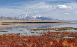 Paesaggio mongolo 1 Immagine Stock Libera da Diritti