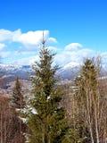 Paesaggio in montagne carpatiche, Ucraina fotografie stock