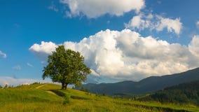 Paesaggio montagnoso con un albero solo archivi video
