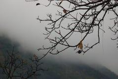 Paesaggio-montano Lizenzfreies Stockbild