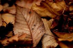 Paesaggio morto di autunno delle foglie Immagini Stock Libere da Diritti