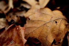 Paesaggio morto di autunno delle foglie Immagine Stock
