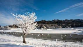 Paesaggio Mountain View dell'albero della neve fotografie stock