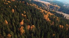 Paesaggio mouting della foresta di autunno in volo video d archivio