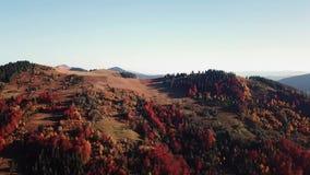Paesaggio mouting della foresta di autunno in volo archivi video