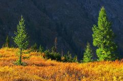 Paesaggio multicolore. Fotografie Stock