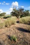 Paesaggio namibiano Fotografie Stock