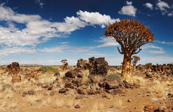 Paesaggio namibiano Fotografia Stock Libera da Diritti