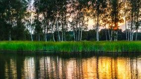 Paesaggio naturale con le betulle sopra uno stagno al tramonto Betulla immagini stock