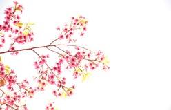 Paesaggio naturale dell'albero Fotografia Stock