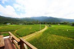 paesaggio naturale dell'azienda agricola del riso agricoltura di coltivazione Fotografia Stock Libera da Diritti