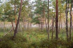Paesaggio naturale della foresta Fotografia Stock Libera da Diritti
