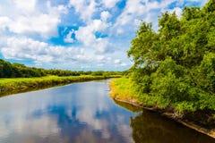Paesaggio naturale di estate con il fiume Zona umida in Florida, U.S.A. Fotografia Stock Libera da Diritti