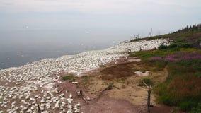 Paesaggio naturale di Matapedia della penisola di Gaspes stock footage