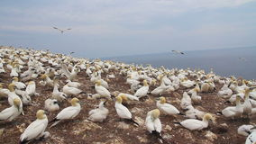 Paesaggio naturale di Matapedia della penisola di Gaspes archivi video