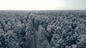 Paesaggio naturale strabiliante della montagna di stagione invernale del colpo aereo nevoso della foresta, foresta congelata e fi archivi video